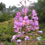 Orchideen in freier Natur
