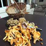 Girolles, russules et polypores