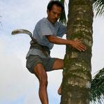 Palmzucker Gewinnung - Erster Schritt