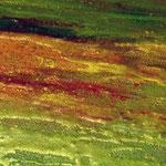 Lotus Lake (detail)