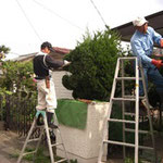 ⑥庭木の剪定