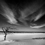 Loonse Drunense dunes