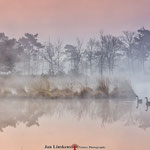 Geese in the morning at the N.P. The Maasduinen