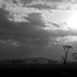 serengeti np II