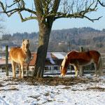 Im Winter auf der Weide