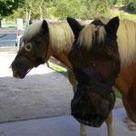 Huch! Die Pferde mit Fliegenmasken