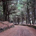 Rundfahrt El Hierro