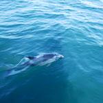 Viel Delfinbesuch
