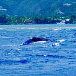 ... and a humpback whale - whoohoo!