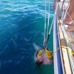 Mann-über-Bord Übung