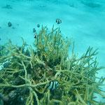 Diving under