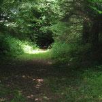 un chemin creux Quénépévant