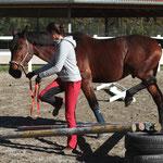 """Hier im Hindernis """"Stern"""" sieht man sehr gut, wie das Pferd aufmerksam mitmacht und die Hinterhand aktiv einsetzt!"""