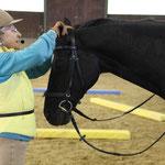 Bekanntmachen mit dem Pferd vor dem Aufsteigen