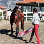 """Mit Hilfe der Körperbandagen sind Pferde in der Arbeit """"mehr bei sich"""" und lassen sich weniger durch äußere Reize ablenken."""