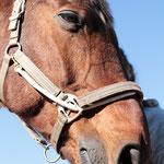 Das zufriedene, müde Tellington-Pferdegesicht: Man sollte sich daran gewöhnen ;)