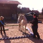 Mellek in der Brieftaube: am ersten Tag noch die unnahbare Dame, am Rest des Kurses das interessierteste und freundlichste Pferd!