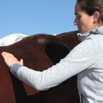 """Mit den sogenannten """"TTouches"""" (""""Trust Touches"""") rege ich die Nervenzellen unter der Haut an und verbessere so das Wohlbefinden des Pferdes und baue Vertrauen auf: Die Grundvoraussetzung für ein sicheres Miteinander."""