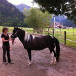 Betrachten von unterschiedlichen Pferden zur Beurteilung der anatomischen Zusammenhänge