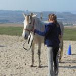 Quarmen - ein fleißiges Pferd!