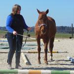 """Lila: """"Die Entdeckung der Langsamkeit"""" - ein so freundliches Pferd!"""