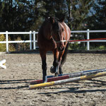 """In der Führposition """"Fröhlicher Delfin"""" (auch eine gute Vorbereitung zum Anlernen des Longierens) lernt das Pferd mehr Abstand zum Menschen einzuhalten und selbstständig in Balance Hindernisse zu bewältigen."""