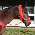 Körperbandagen: Sehen beim ersten Hinsehen zwar komisch aus, unterstützen durch ihr sanftes Anliegen am Pferdekörper aber enorm die Körperwahrnehmung, Koordination und Konzentration.