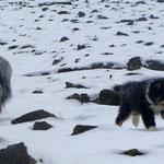 Kiwi und Bladerunner