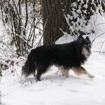 Cheyenne unser altes Mädchen
