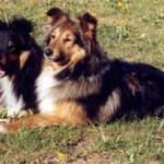 Ginger & Brenda of Summgarden