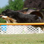 "Top Secret ""Ally"" QUALIFIZIERTE AGILITY-WM 2011"