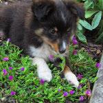Irishrose of Summergarden