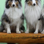 Kiwi and Nash