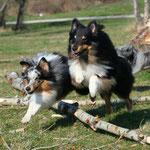 Highlander und Logan of Summergarden