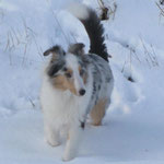 Wistwin Alpine Arctic