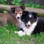 Walker und Whoopie