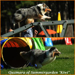 Kiwi (Quamara of Summergarden)