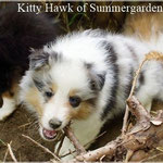 Kitty Hawk of Summergarden