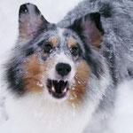 Kiwi beim Schneeball fangen