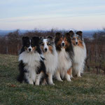 Our boygroup (Luxi, Nash, Twain, You)