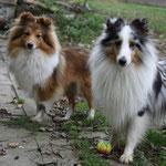 Venja und Nash warten darauf,  dass der Ball geschossen wird :-)