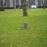 parkje met tombes