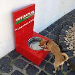 Mandy an der Tankstelle im Europapark. Hoffentlich bleibt noch etwas für die anderen Hunde!