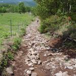 子根子岳を下りきると、小石がごろごろしたくだりが続く。これがしんどい