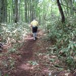 後半の笹薮。これがきつい。ひたすら登りが続く