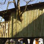 Kesseldruck-imprägniertes Holz zb. für Baumhäuser