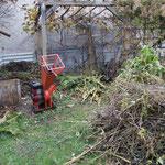 Kermesbeere rechts neben dem Häcksler Komposthaufen Oktober