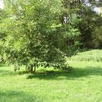 Viele Bäume spenden im Sommer reichlich Schatten