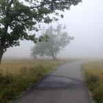 Kahler Asten: Unter den Bäumen ist es vom Nebel feucht.