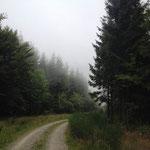 Nebelschwaden ziehen herauf (im Wald auf 700m ünN)